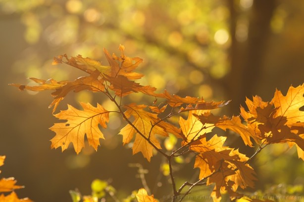 Autumn light in the forest