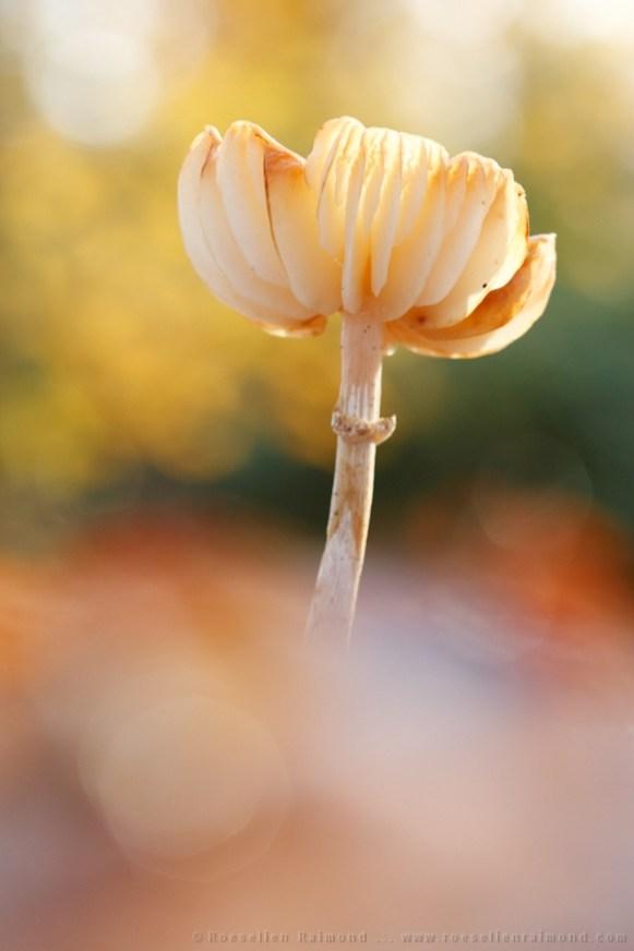 bokeh Autumn fall mushroom fungus