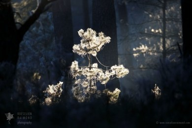 forest tree frost
