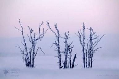 Trees snow winter