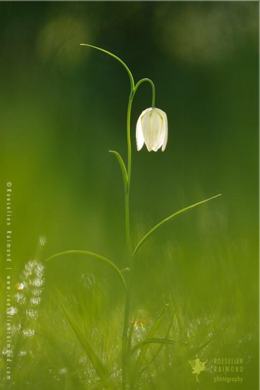 Fine art nature photography