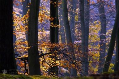 autumn leaves colours scenery landscape mood atmosphere
