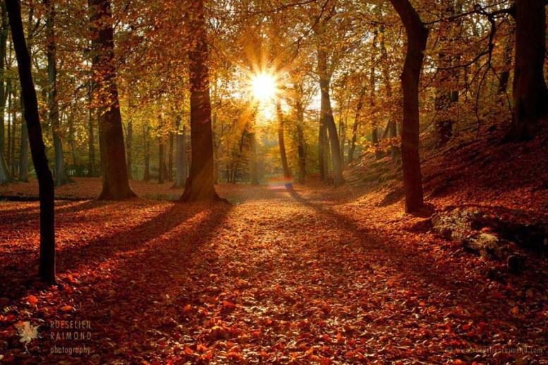 Autumn MagicBeech forest at sunset
