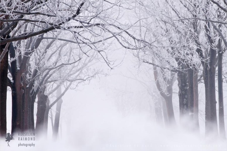 hoar frost winter scenery landscape snow ice cold trees Netherlands mist