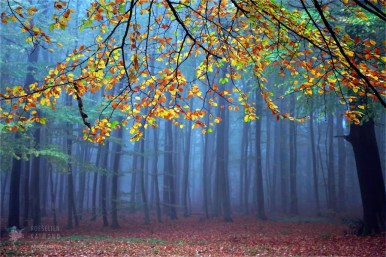 Fine art photo of a forest