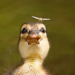 Duckface