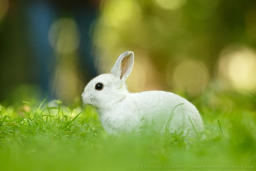 white rabbit bunny cute funny humour