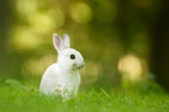 smiling_rabbit