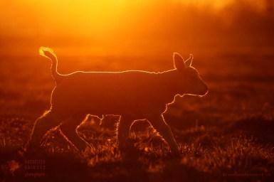 Lamb rim light