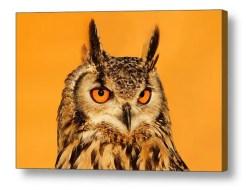 fineart_eagle_owl