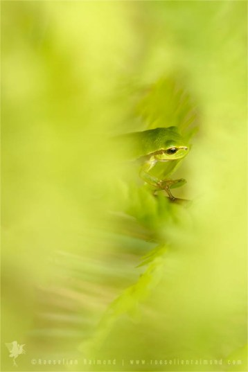 tree frog fine art photography