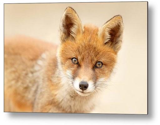 fineart_fox_print