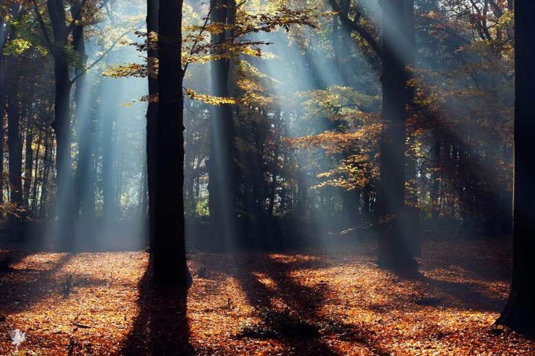 Early morning autumn forest