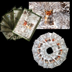 Pomegranate cards for Sierra Club