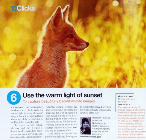 Practical Photography fox kit in warm light