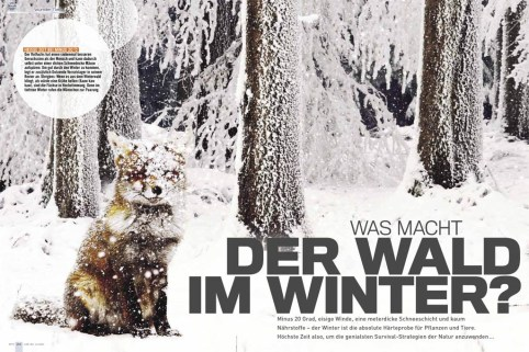 Bauer Media Fox in the Snow Publication