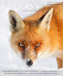 Red Fox in the Snow Cover Orion Magazine