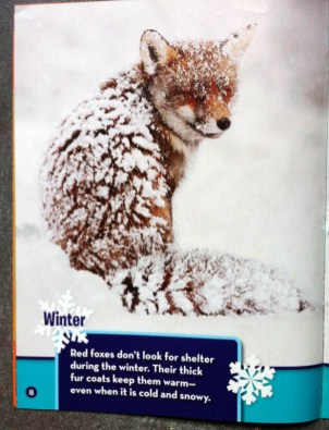 Publication Wildlife Federation Ranger Rick Red Fox in the Snow