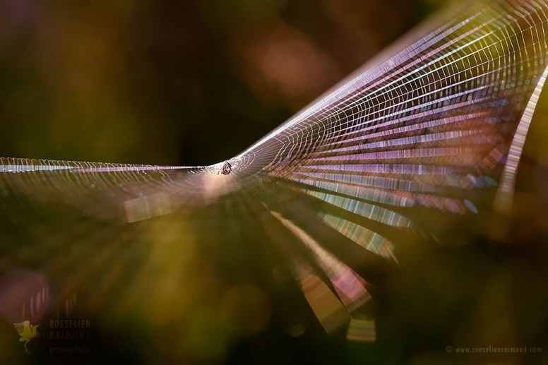 Cobweb at sunrise with light reflections