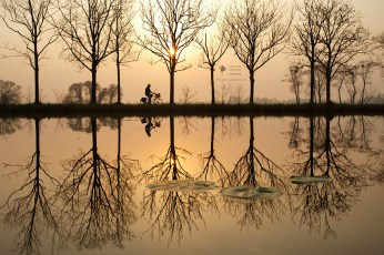 Water and Tree Reflections