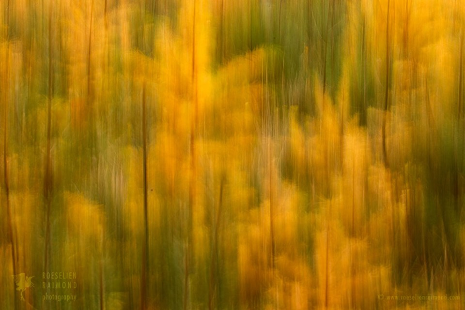 Intentional camera movement in an autumn forest