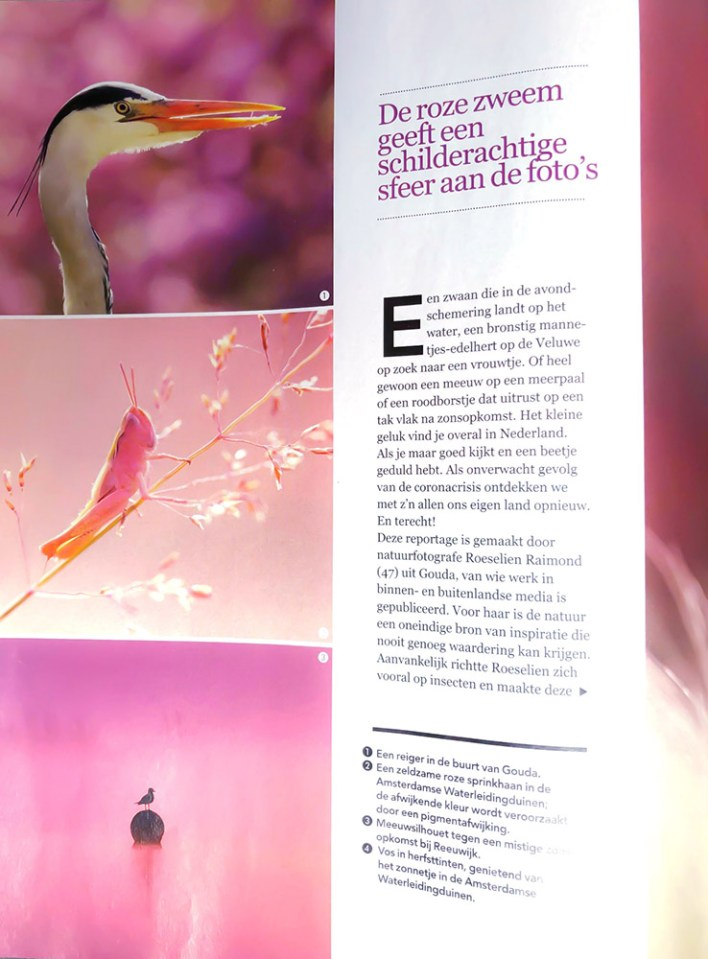 Plus Magazine Roze Sprinkhaan