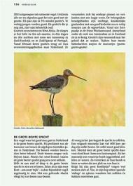 Vogels in Nederland Vogels in Nederland - Grutto