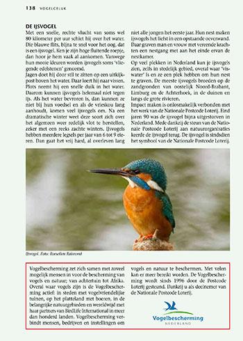 Vogels in Nederland - IJsvogel