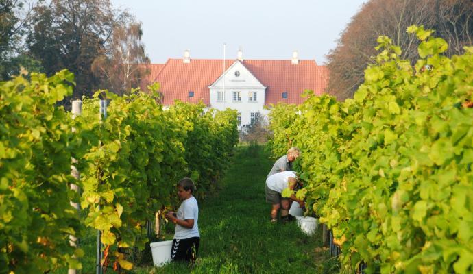 dyrehoejgaard_vinhoest_red