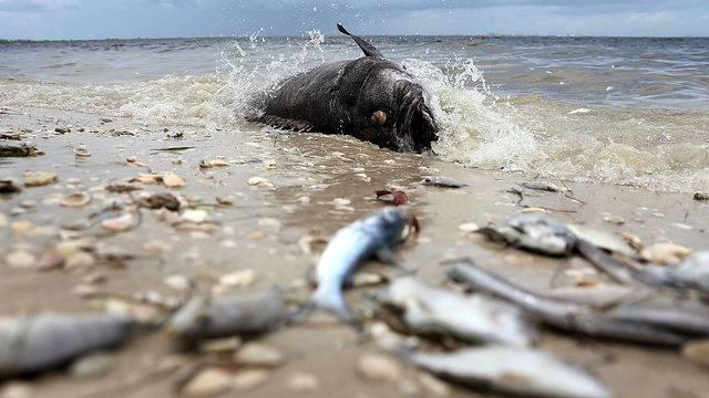 Marine Life Experts Address Red Tide Concerns
