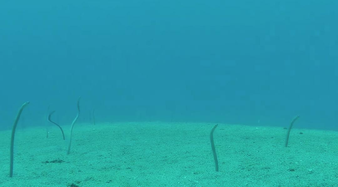 Eels!