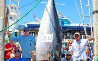 A Year Later, an 827 lb. Bluefin Tuna Caught in Florida is Touted as a World Record