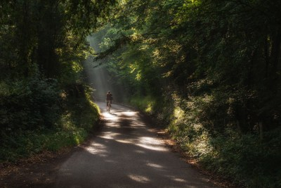 Shafts of sunlight and dense greenery create a Jurassic Park effect on this lane in the weald