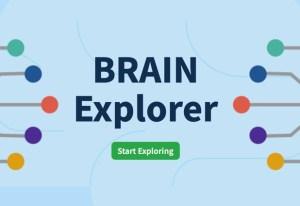 brainexplorer