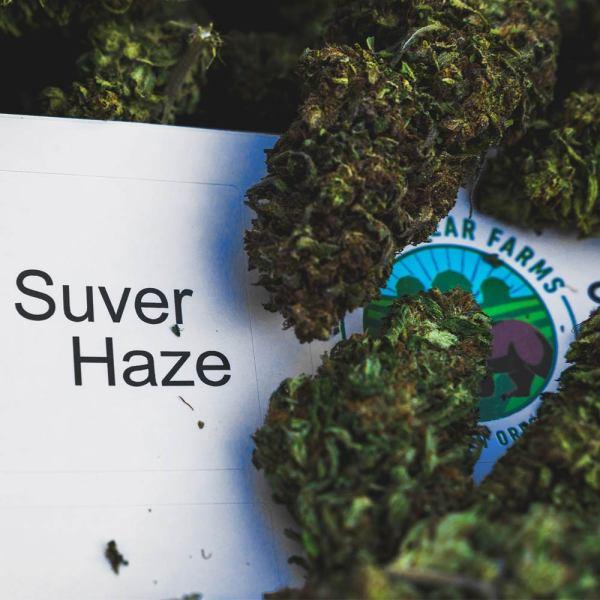 CBD Hand Trimmed Hemp by Rogue Hemp Farms Flower Suver Haze