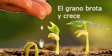 el grano brota y crece – Marcos 4,26-34