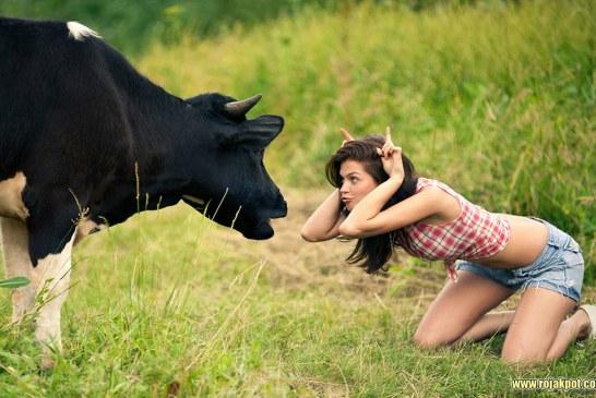 DNA In Cow's Milk Creates Hot-Tempered Children – UPDATED!
