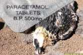 The Paracetamol Kills Vultures + Humans Hoax Debunked!