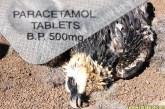 The Paracetamol Kills Vultures + Humans Hoax Debunked!