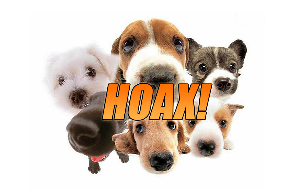 The Pedigree Dog Adoption Is A Hoax! Read & SHARE!
