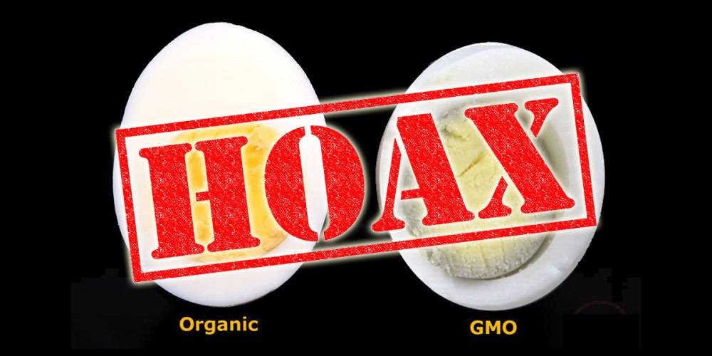 The GMO Egg vs. Organic Egg Comparison Debunked!
