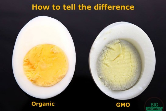 The GMO Egg vs. Organic Egg Comparison Debunked