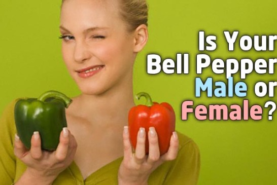 Is Your Bell Pepper Male Or Female : The Truth!