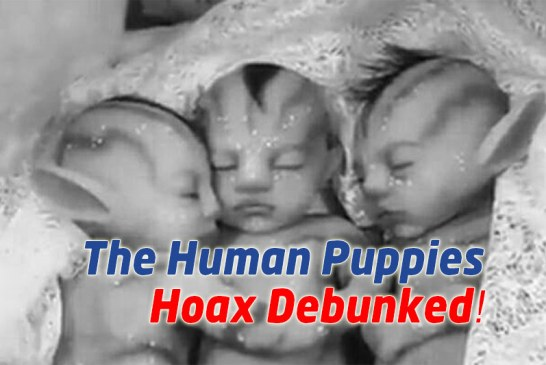 The Kedder Human Puppies Hoax Debunked!