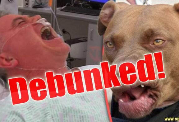 Bulldog Bites Pedophile Randle James Hoax Debunked!