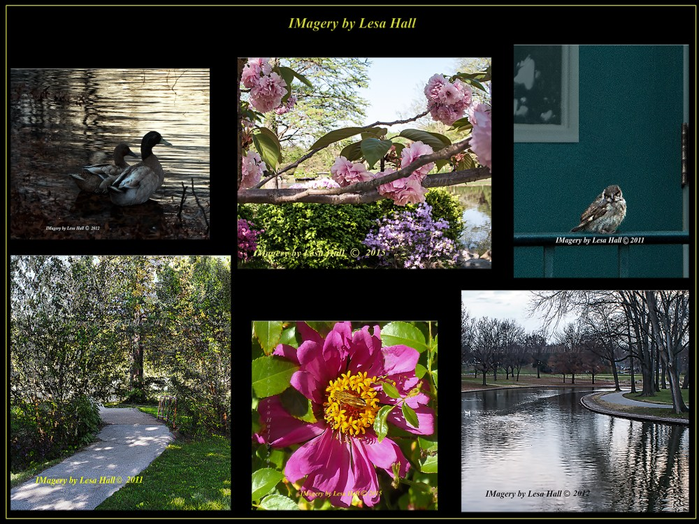 The IMagery by Lesa Hall website