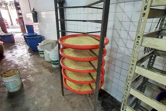 Yamarico Tea noodle factory 08