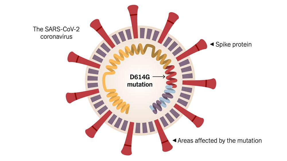 D614G mutation explained