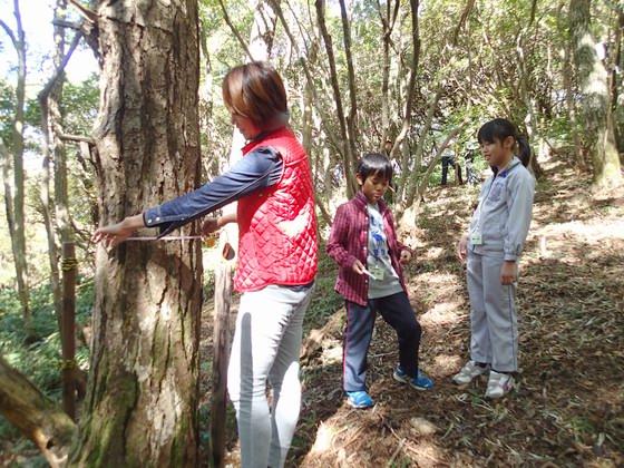 木の太さを測る