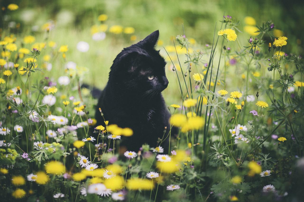 Prolećne alergije i kako se izboriti sa njima: Med, vitamin C i ljuta hrana pomažu